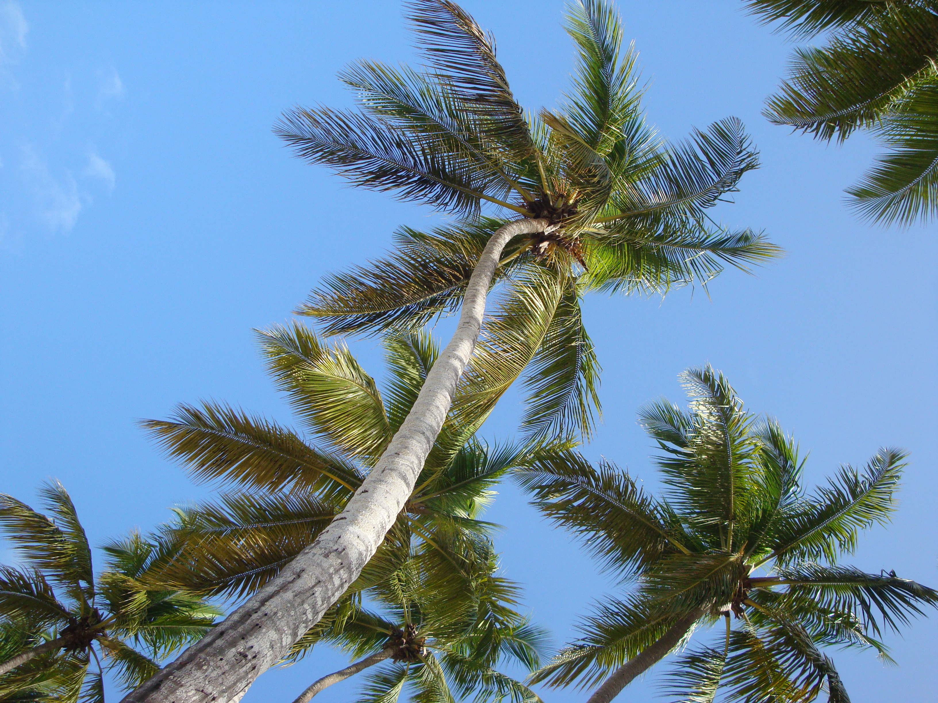 Caregiver Stress Relief Photo Palm Trees