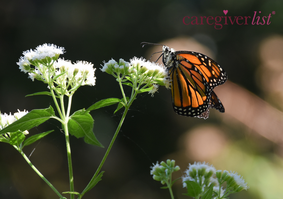 Butterfly in Autumn Sunshine: Stress Relief Photo
