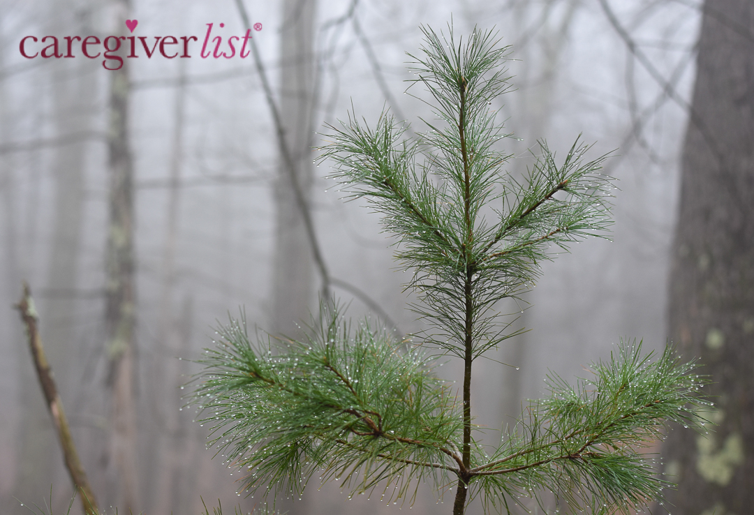 Stress Relief Photo: In the Foggy Forest