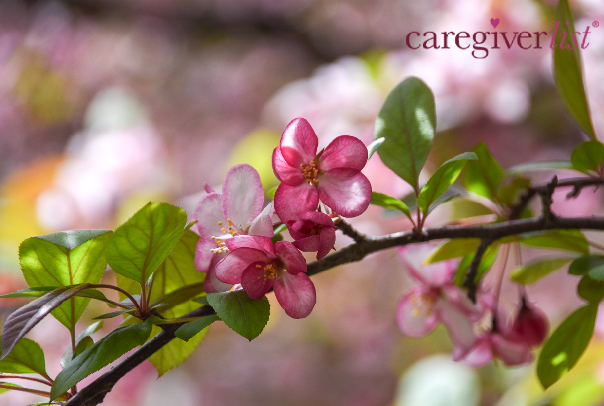 Caregiver Stress Relief:  Chicago Blossoms