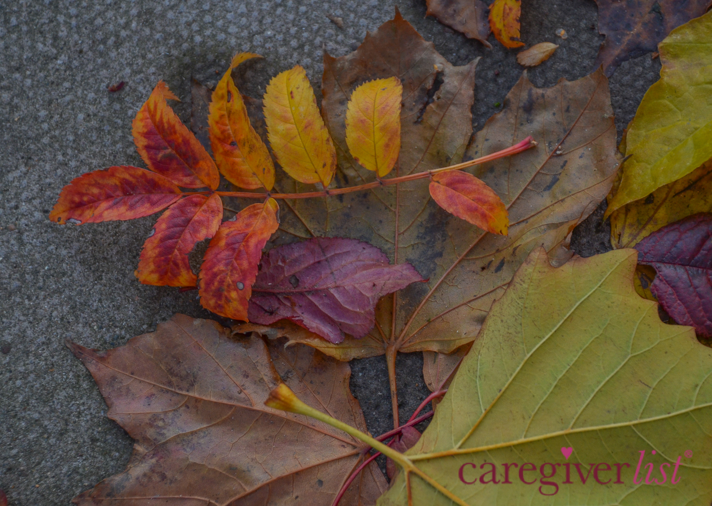 Autumn Leaves in London: Stress Relief Photo