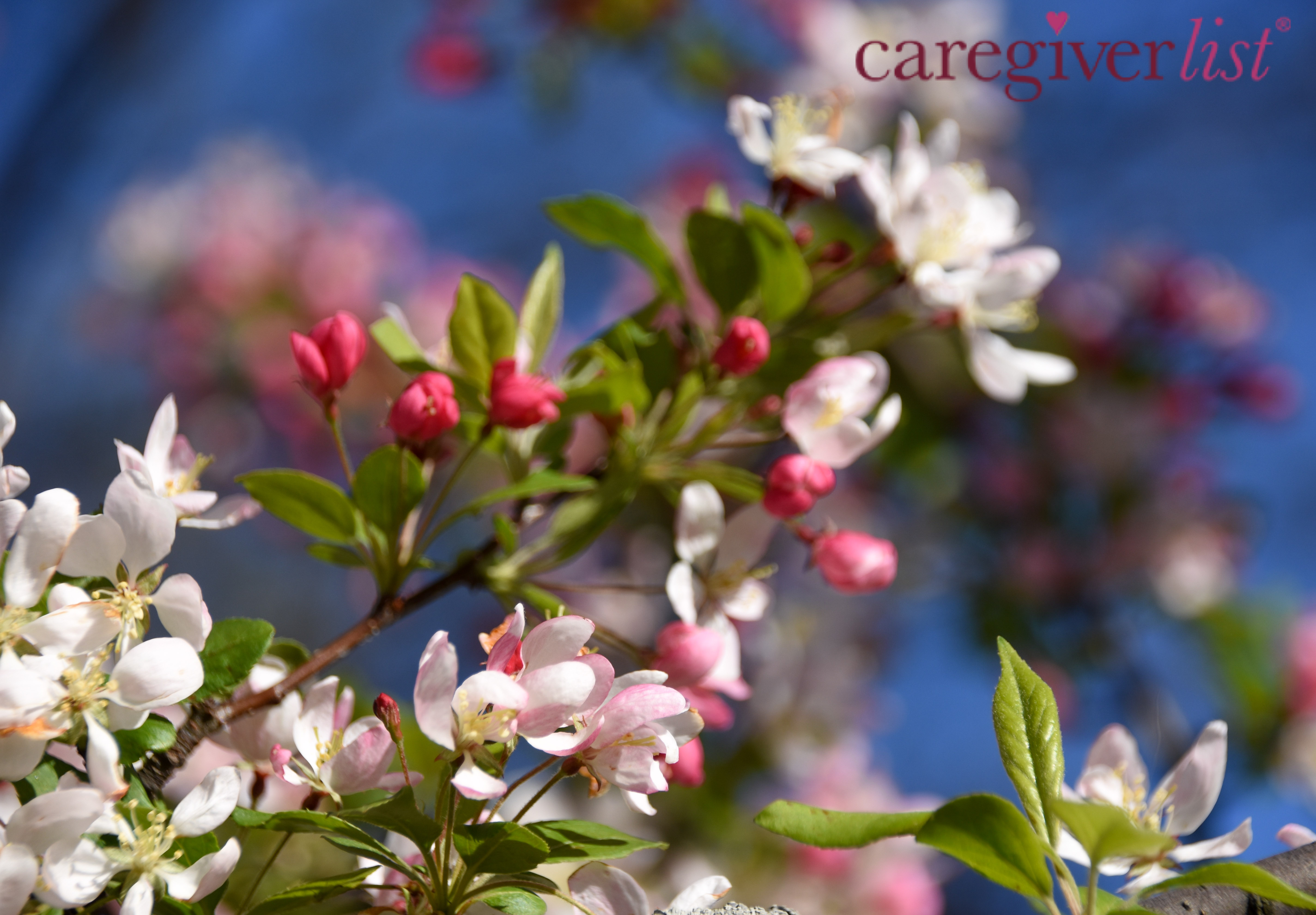 Blossoms and Blue Sky for Caregiver Stress Relief