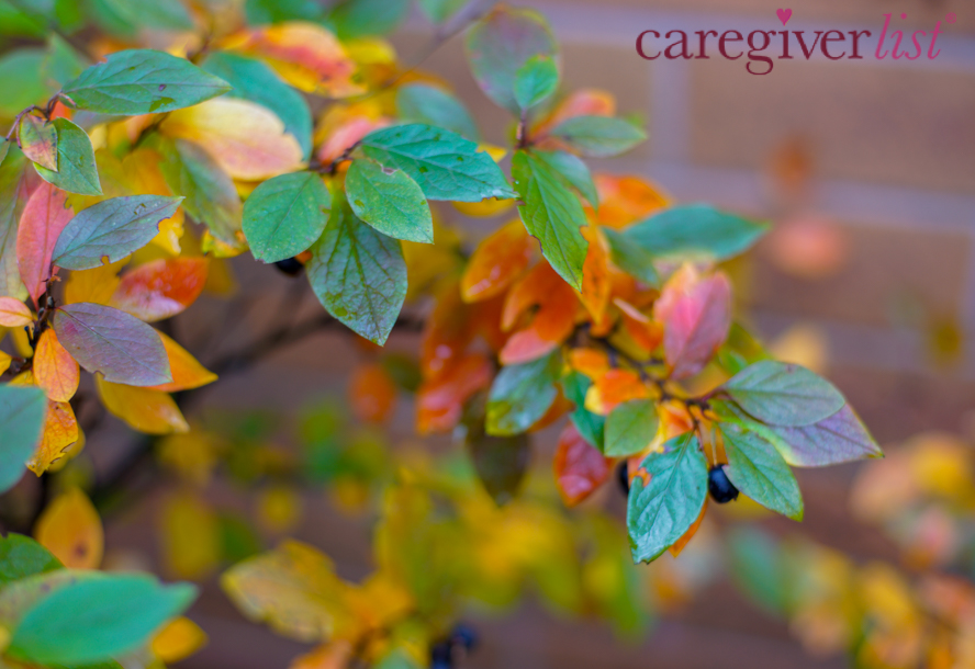 Autumn Colors for Caregiver Stress Relief