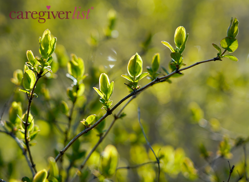 Spring Hopes for Caregiver Stress Relief