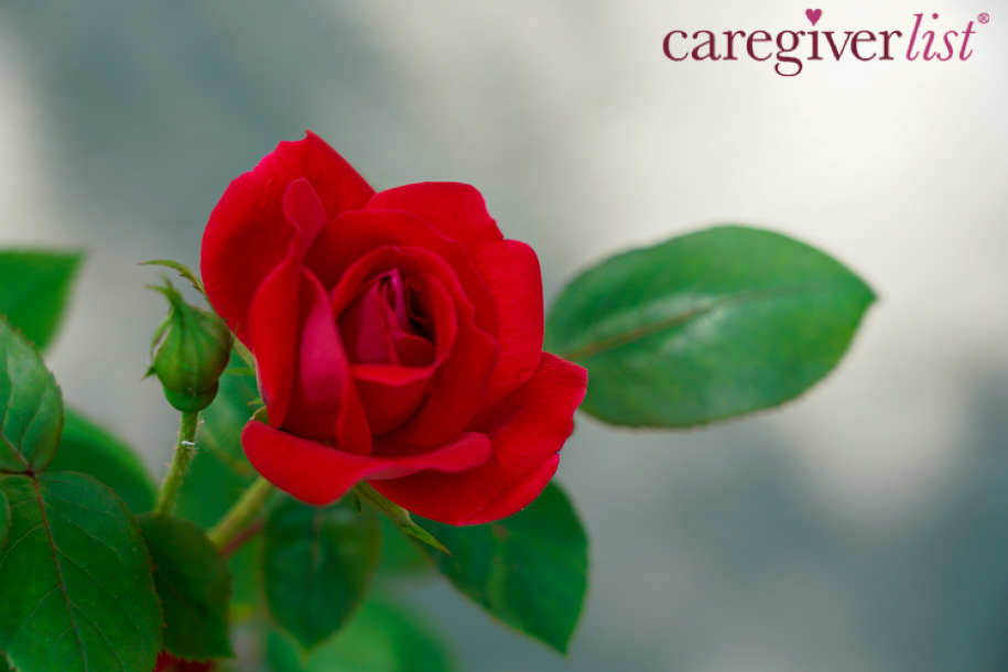 Gratitude for Caregivers: Stress Relief Photo