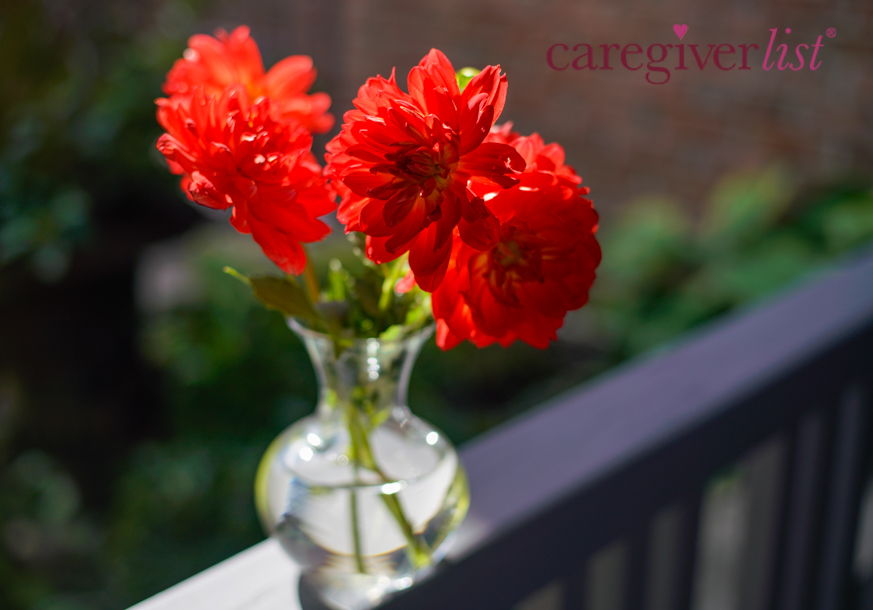 Stress Relief Photo: Bright Summer Blooms