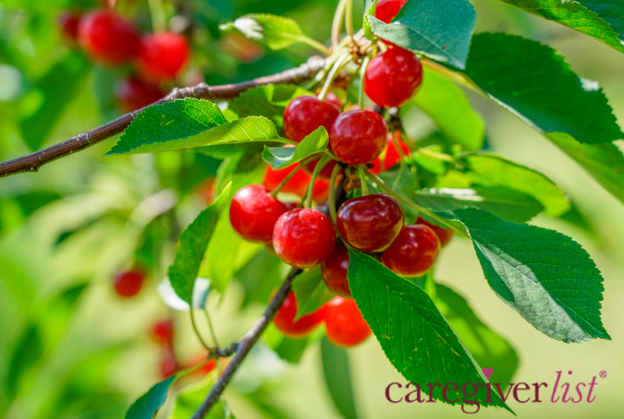 Fruit of Summer for Caregiver Stress Relief