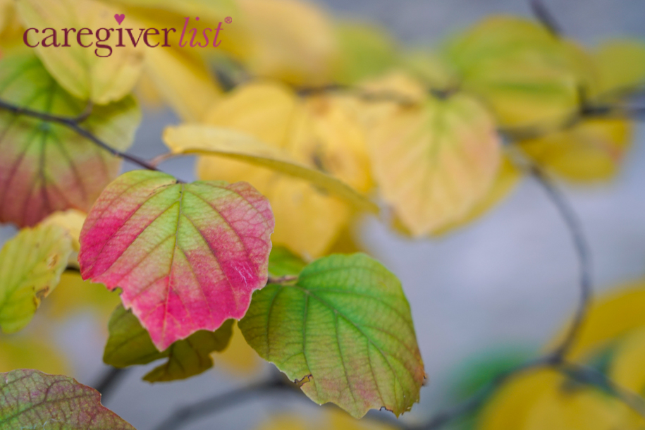 Autumn Color for Caregiver Stress Relief