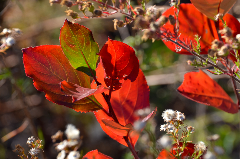 Caregiver Stress Relief: Enjoying the Colors of Fall